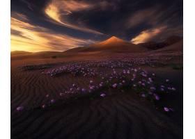 沙漠,花,日落,紫色,花,沙,壁纸,图片