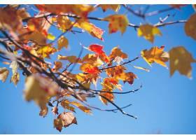 秋天,自然,叶子,树枝,壁纸,图片