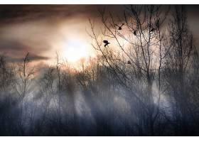 阳光,自然,树,鸟,壁纸,图片