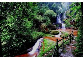 瀑布,瀑布,自然,植物,森林,水,苔藓,壁纸,图片