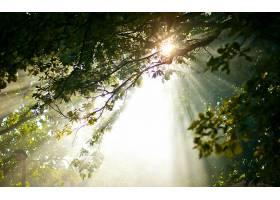 阳光,自然,树枝,壁纸,图片