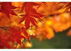 秋天,自然,叶子,污迹,壁纸,(1)