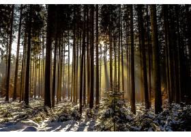 阳光,自然,森林,冬天的,树,壁纸,图片