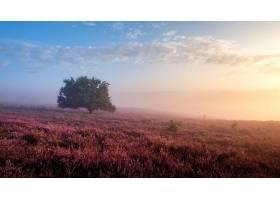 雾,自然,风景,树,紫色,花,壁纸,图片