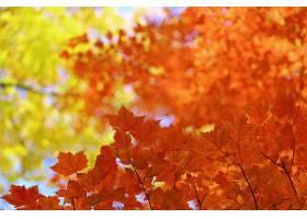 秋天,自然,叶子,污迹,壁纸,
