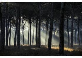 阳光,自然,森林,壁纸,(1)图片