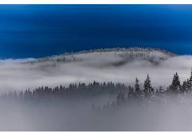 雾,自然,风景,森林,树,冬天的,壁纸,图片