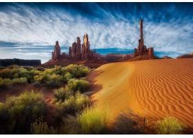 沙漠,风景,沙,树,岩石,壁纸,