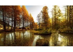 秋天,自然,壁纸,