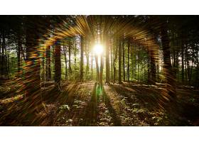 阳光,自然,森林,壁纸,(2)图片