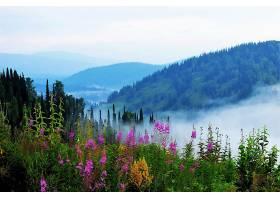 雾,自然,风景,粉红色,花,壁纸,图片