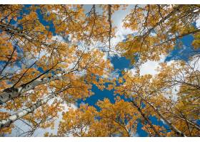秋天,自然,树,叶子,树顶酒店,壁纸,(1)