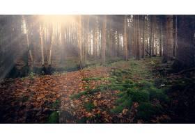 阳光,自然,森林,壁纸,图片