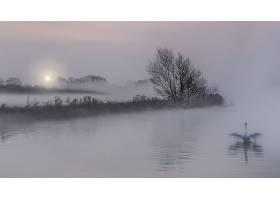 雾,自然,鸟,天鹅,壁纸,图片