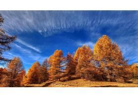 秋天,自然,树,天空,云,叶子,壁纸,