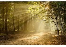 阳光,自然,森林,小路,壁纸,图片