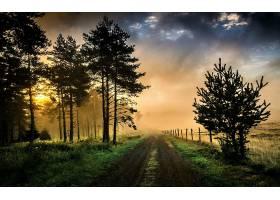 雾,路,泥土,路,国家,树,草,领域,栅栏,壁纸,图片