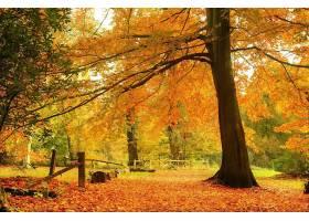 秋天,自然,树,森林,壁纸,图片