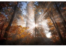 阳光,自然,森林,小路,树,秋天,壁纸,图片