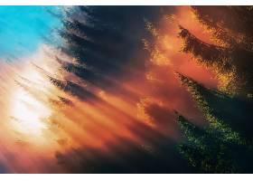 雾,阳光,自然,壁纸,图片