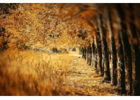 秋天,自然,树,污迹,绿树成荫,壁纸,图片