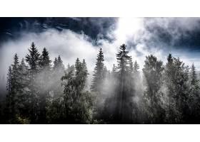 阳光,自然,森林,树,云,壁纸,图片