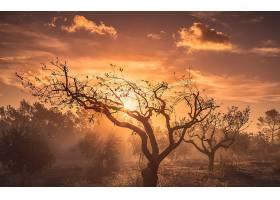 日出,自然,树,阳光,壁纸,图片