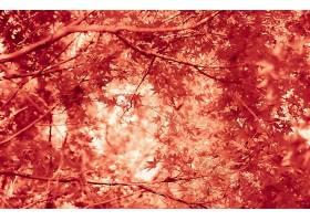 秋天,自然,树枝,叶子,叶子,壁纸,