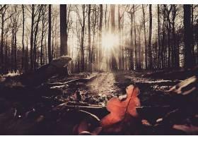 阳光,自然,森林,树,叶子,壁纸,图片