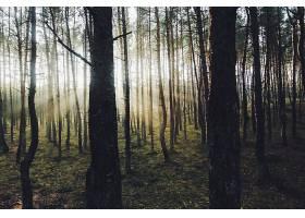 阳光,自然,森林,树,壁纸,(1)图片