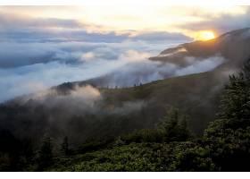 雾,风景,云,日落,加利福尼亚,美国,树,天空,壁纸,图片