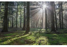 阳光,自然,森林,树,壁纸,(11)