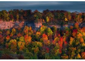 秋天,自然,森林,叶子,壁纸,