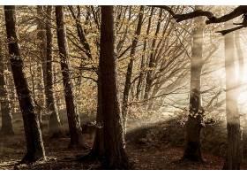 阳光,自然,森林,树,壁纸,(12)图片