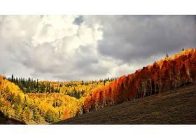 秋天,自然,森林,叶子,树,云,风景,壁纸,