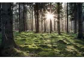 阳光,自然,森林,树,壁纸,(13)图片
