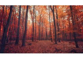 秋天,自然,森林,树,叶子,壁纸,