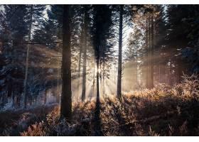 阳光,自然,森林,树,壁纸,(14)图片