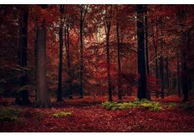 秋天,自然,森林,树,壁纸,