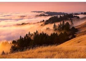 雾,风景,自然,壁纸,图片