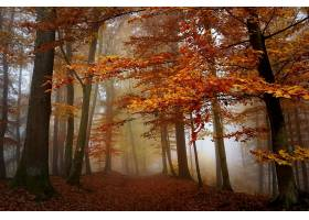 秋天,自然,森林,树,雾,壁纸,