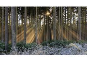 阳光,自然,森林,树,壁纸,(4)图片