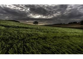 小麦,自然,夏天,领域,壁纸,(3)图片