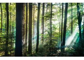 阳光,自然,森林,树,壁纸,(5)图片