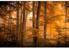 秋天,自然,森林,雾,树,叶子,壁纸,
