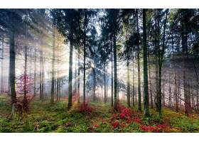 阳光,自然,森林,树,壁纸,(6)图片