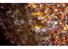 秋天,自然,水,叶子,壁纸,