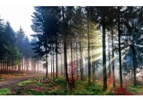 阳光,自然,森林,树,壁纸,(7)图片