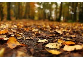 秋天,自然,污迹,叶子,壁纸,图片
