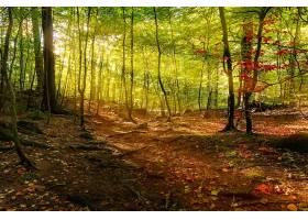 阳光,自然,森林,树,壁纸,(8)图片
